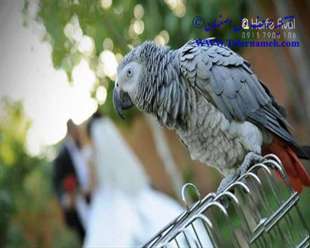 آتلیه حرف اول اصفهان